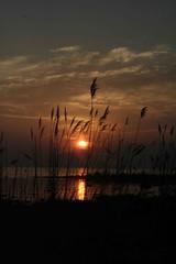 sunset (Rachel Dawson Photography) Tags: naturethroughthelens