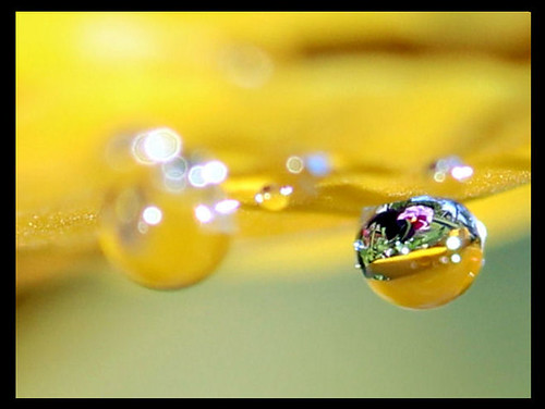 Raindrop on petal