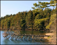 Timber (scottnj) Tags: park favorite usa lake storm tree green beach nature water pine america forest newjersey colorful flickr timber nj hike estrellas oceancounty blueribbonwinner goldstaraward sognidreams laceyroad enoscountypark scottnj