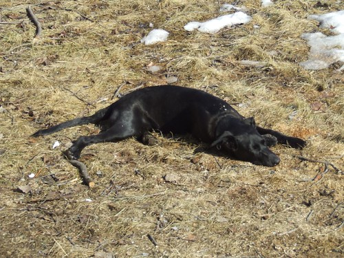 Joey sleeping on the grass