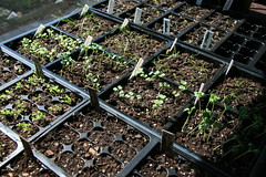 more seedlings