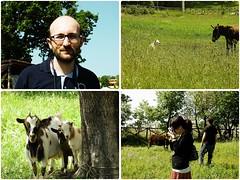 "A noi ""ci"" piace la vita campestre (-Alina-) Tags: dog green me andy grass emma donkey goat erba prato fede asinello cagnina vitacampestre mak domenicacampagnola caprettine"