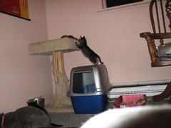 11-24-07 476 (teribul_teri) Tags: cat play kittens cuties