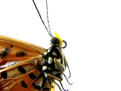 Butterfly Close Up (Janielle Beh) Tags: macro eye butterfly photography wings spirit spots soe ultimateshot explorewinnersoftheworld
