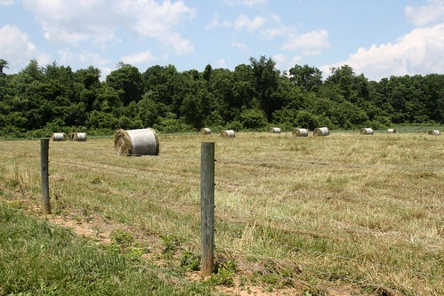 Excess forage was harvested for hay