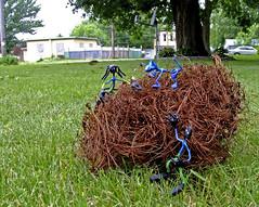 Maple Tumbleweeds - Thin Man  Day144   6/17/2008 (pbobumc) Tags: blue art fun toys jane thinman oneobject365daysproject