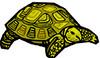 tortoise (3doel82) Tags: fish bird animals insect gambar koleksi ikan belajar burung binatang carnivora serangga mamalia amphibi