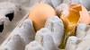 Slightly cracked - 244/365 (JustABigGeek) Tags: ma nikon massachusetts eggs carton 365 cracked middleboro d80