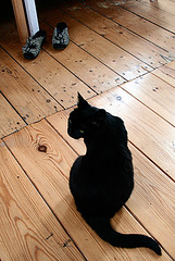 le chat noir (jana shea) Tags: cat kitty lechatnoir kleinepoes
