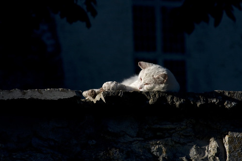 Lazy White Cat in Keila