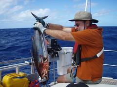 Marks tuna
