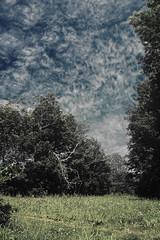 (CDow) Tags: sky colors clouds nikon meadow kitlens 1855mm polarizer circular muted d40