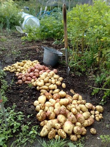 Potato Quartet