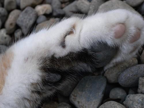 cat 亀戸天神の猫