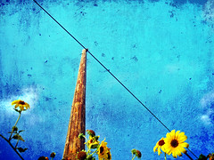 Country Glory (Sheree Altobelle) Tags: california flowers blue sky texture yellow wire san photographer farm telephone country farming central pole joaquin valley wildflowers agriculture telephonepole agricultural visalia centralvalley centralcalifornia tularecounty ✿ shereealtobelle
