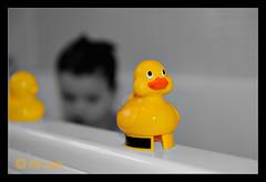 Lucky Ducks (rikl64) Tags: blackwhite ducks bathtime selectivecolour d700 2470mmf28g