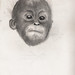 Baby Ape by Erin Michalak
