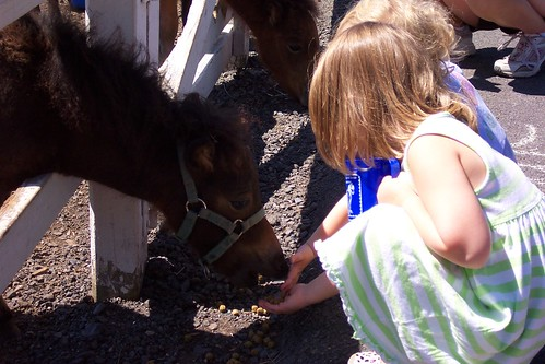 Feeding the Little Horses