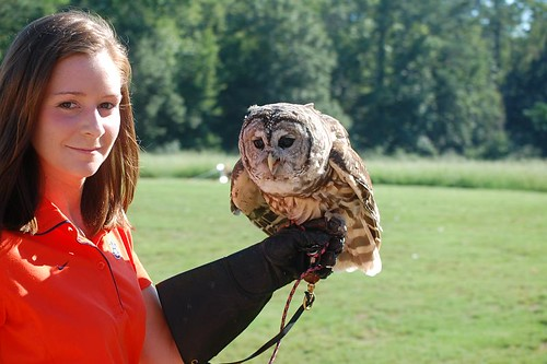 Barred Owl and handler