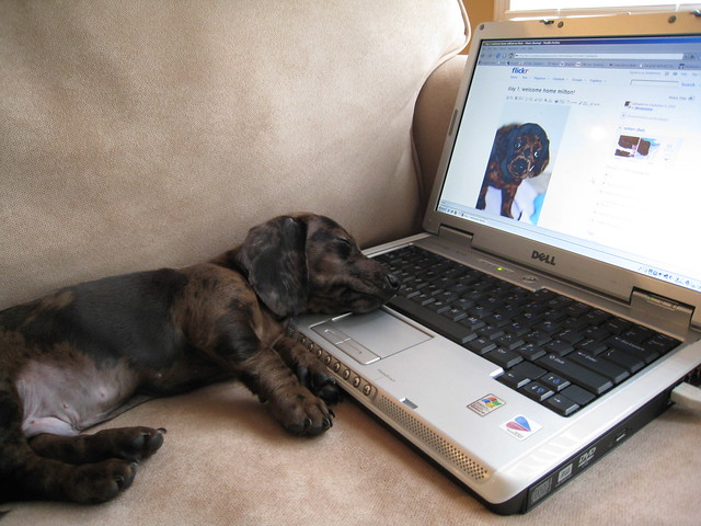 Best Voip Service >> Photos of dogs using computers