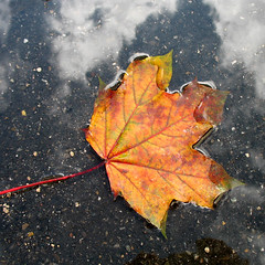 Autumn Art in a Puddle (Batikart ... handicapped ... sorry for no comments) Tags: road street blue autumn red sky orange cloud color colour macro reflection tree rot art fall nature water leaves rain yellow closeup canon germany geotagged puddle deutschland idea leaf maple flora colorful wasser europa europe heart stuttgart earth laub herbst natur creative himmel wolke ground foliage gelb greenery colourful blau makro blatt leafs 2008 bltter spiegelung herz baum regen bunt badenwrttemberg swabian pftze ahorn canonpowershota610 ahornblatt autumntints herbstfrbung 100faves 201205 200faves viewonblack 300faves herbstfarbe batikart