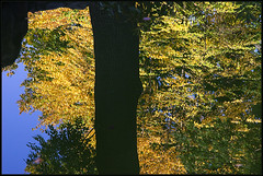 Autumn Impression #4 (AnyMotion) Tags: autumn reflection tree water pond wasser colours herbst chinesegarden 2008 teich baum farben reflektion nordend chinesischergarten bethmannpark frankfurtnordend