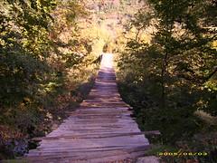 asma köprü