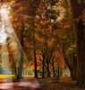 Autumn and Light...... (i.rashid007) Tags: uk autumn fall manchester lightrays longford longfordpark