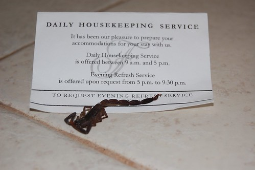 Daily five star housekeeping service