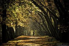 Autumn (snake.eyes) Tags: park autumn lodz łódź jesień piłsudskiego zdrowie