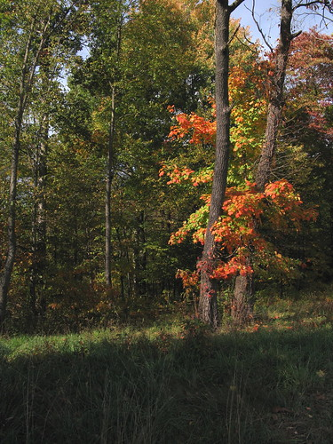 Pond Trees2