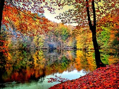 Autumn colours (NURAY YUZBASI) Tags: autumn reflection turkey trkiye natur lo