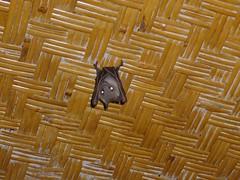 P1080643 (Green_Ocean) Tags: bali indonesia lovina lakebatur karangasem