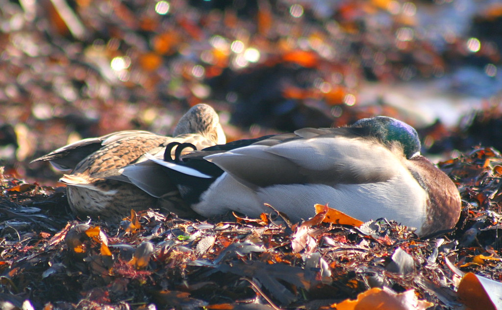 Let sleeping ducks lie!