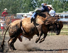 He kissed cowgirl and made the cowboy cry (cowgirlrightup) Tags: cowboy bullriding nester flickrsbest cowgirlrightup mywinners impressedbeauty ultimateshot rodeoraw