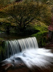 Waterfall 'n' Tree (Anthony Thomas [aka wabberjocky]) Tags: nature water wales relax waterfall aqua peace wasserfall relaxing scenic peaceful brecon beacons cascade cachoeira chute deau cataract cascada waterscape  chutedeau cascata  waterval   anthonythomas wabberjocky  llynyfan