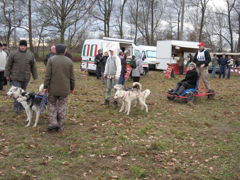 מזחלות כלבים, לפני המירוץ..