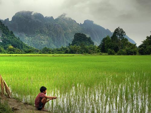 Fishin' in the paddy fields