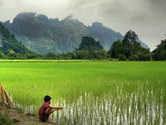 Fishin' in the paddy fields (Bn) Tags: countryside bravo topf300 laos topf100 ricefields topf200 v