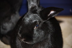 Rabbits that lived with us