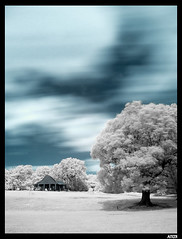 Infrared (Aitor Escauriaza) Tags: london d50 ir nikon long exposure londres eltham r72 infrarred nikon1870 p007 aitorescauriaza