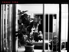 day989 sun30nov08 (a.pic.a.day) Tags: sleeping plants amsterdam sleep interior interieur x slaap curtains 365 planten slapen lookinside bloempot gapen onepictureaday project365 365days apicaday blackwhitephotos onephotoperday 365project opencurtains slapendeman ssleepingman gapendeman httpapicadayblogwordpresscom