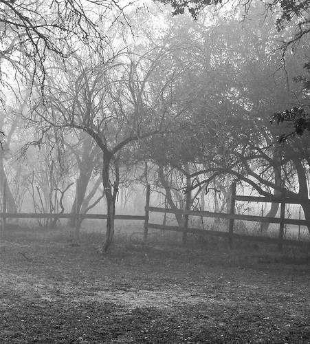 Foggy Black and White