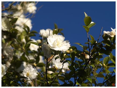 Flowers 081216 #02