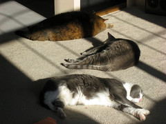 3cats in sun xmasday08