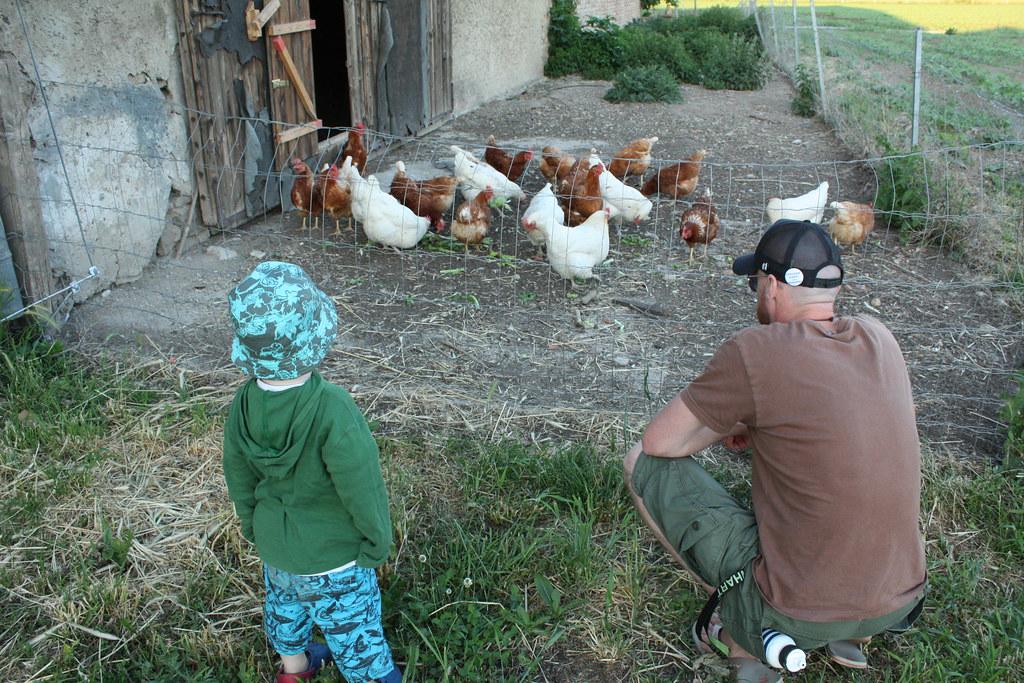Unsere Eier- Lieferanten