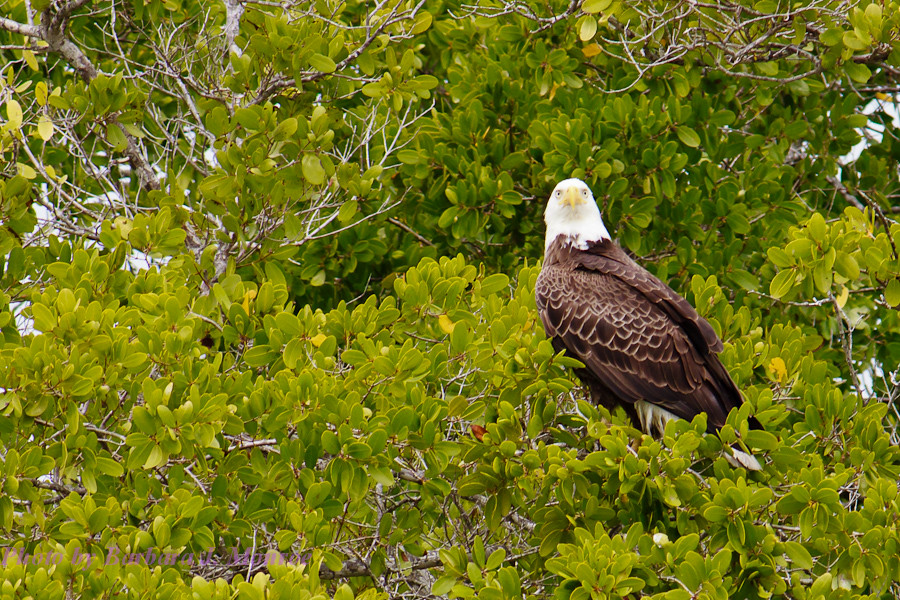 Everglades National Park-10,000 Islands (11 of 16)