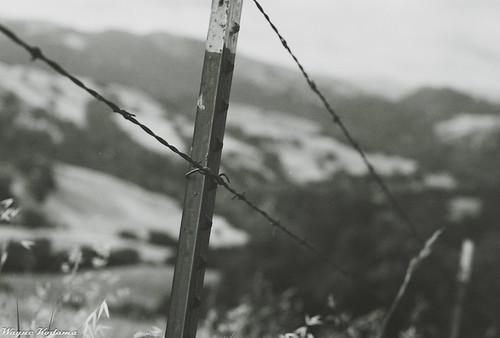 Sunol Fence