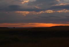 Maasai Mara Sunrise, Kenya