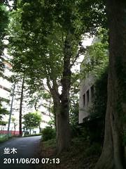 朝散歩:木のある坂